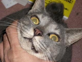 猫(ネコ)と撮影