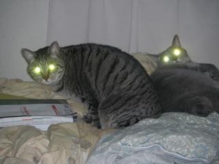 ダブル猫ビーム