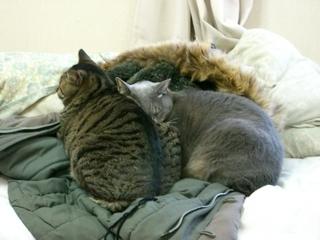 コートの上で寝る猫