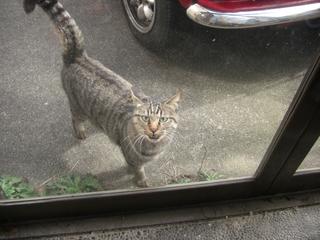 猫さん待ち構える