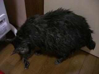 湯上り猫さん