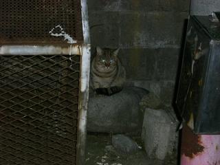 ノラ猫さん