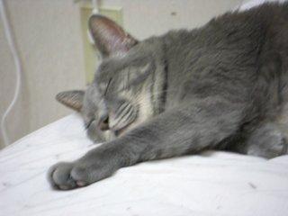 寝る猫アップ