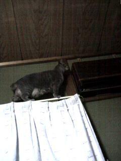 カーテンレール猫