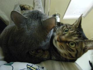 ダブル猫抱っこ