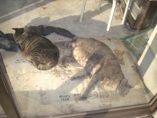 猫と日向ぼっこ