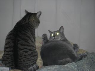猫の光る目