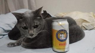 不機嫌ネコ