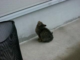 子猫(ネコ)2