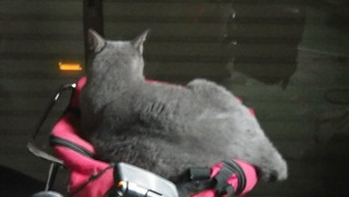 猫さんの背中