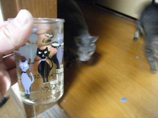 猫とにゃんカップ