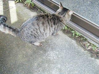 お隣猫さん