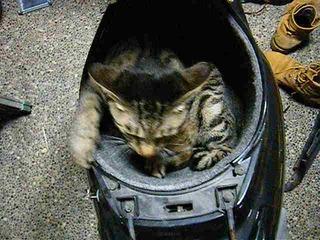 メットイン猫さん