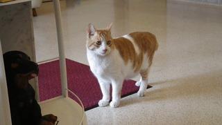動物病院の猫さん