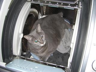 洗濯機と猫