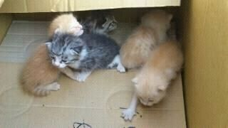 子猫 捨て猫