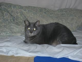ネコ(猫)のビーム