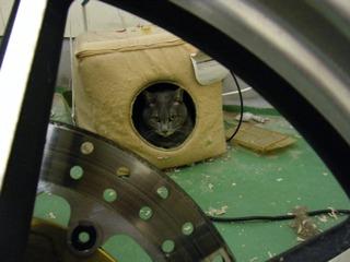 キャットキューブの猫