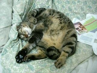 熟睡ネコちゃん