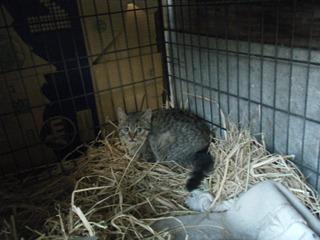 子猫ちゃんと犬小屋