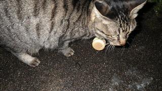 猫さんの首輪