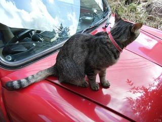 ボンネット猫さん