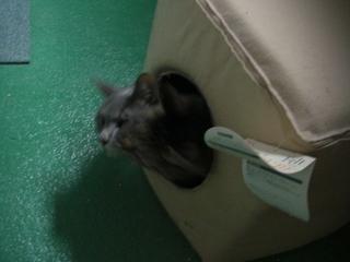 ネコとキャットキューブ