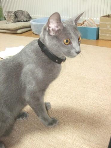 2007_1231猫写真0069