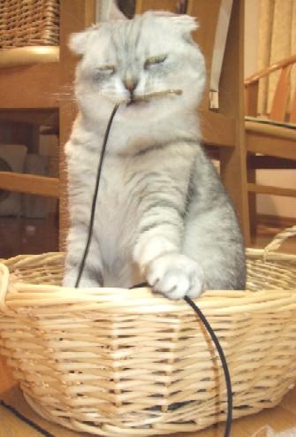 2007_0429猫写真0034