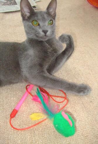 2007_1111猫写真0048