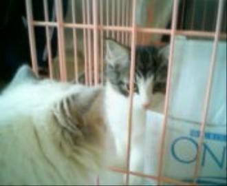 チェルシー子猫3