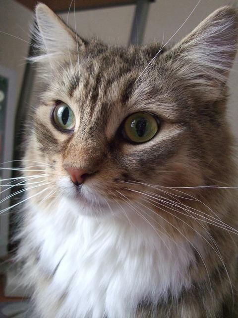 「猫だらけ」つみき3