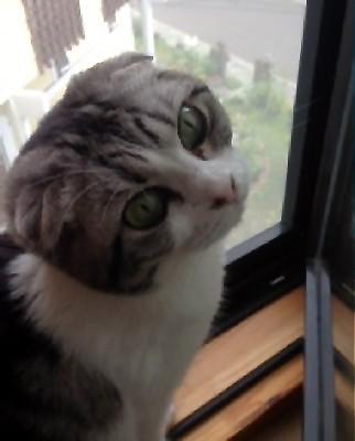 窓辺のナナ