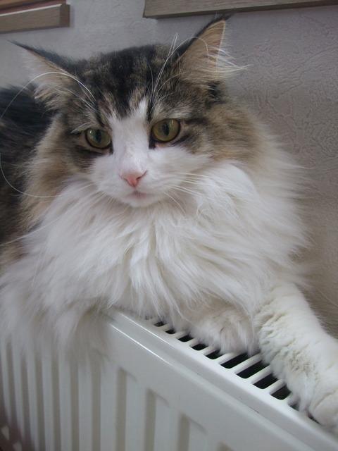 「猫だらけ」チェルシー3