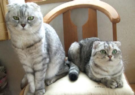2008_0221猫写真0013