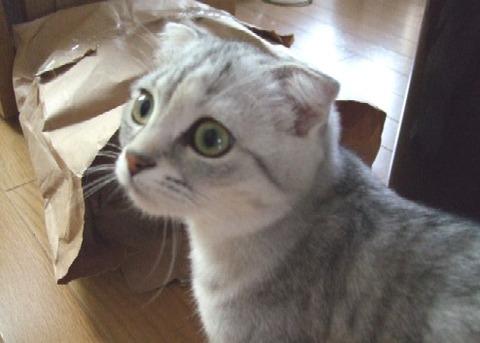 2007_0417猫写真0015