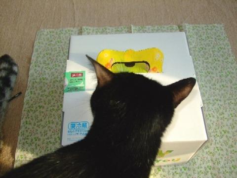 2007_1212猫写真0008