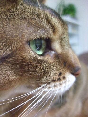 2008_0111猫写真0009