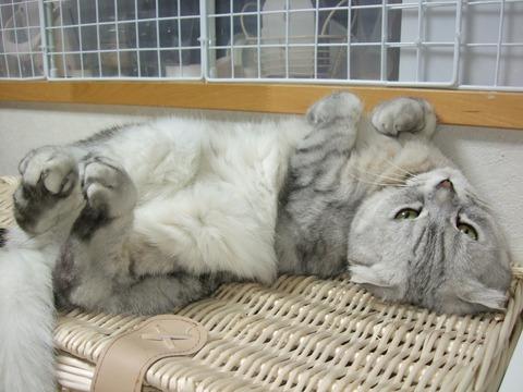 「猫だらけ」マリン4