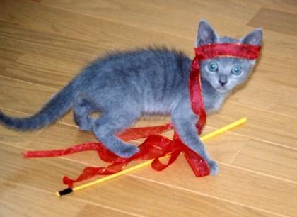 ルシアン子猫