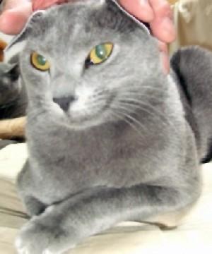2008_0511猫写真0034