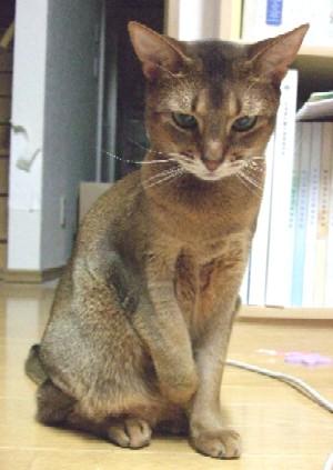 2007_0507猫写真0022