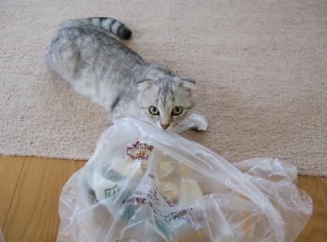 2007_0528猫写真0064