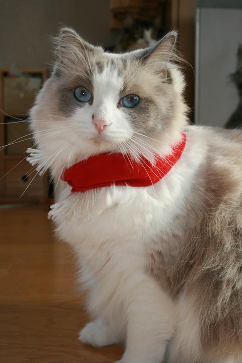 「猫だらけ」ティファニー