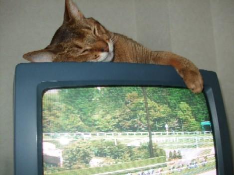 2007_0429猫写真0020