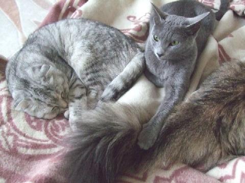 2008_0524猫写真0061