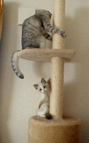 ティファニー子猫4
