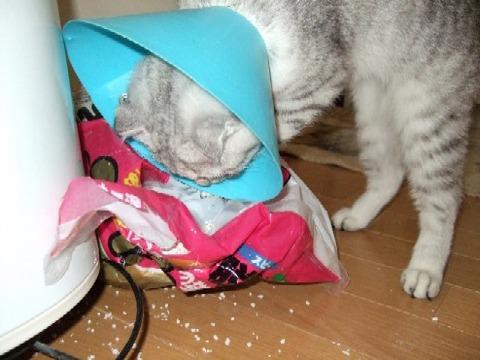 2007_0514猫写真0009