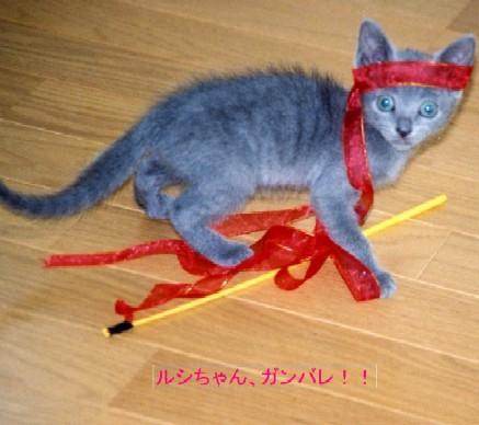 ルシアン子猫さん