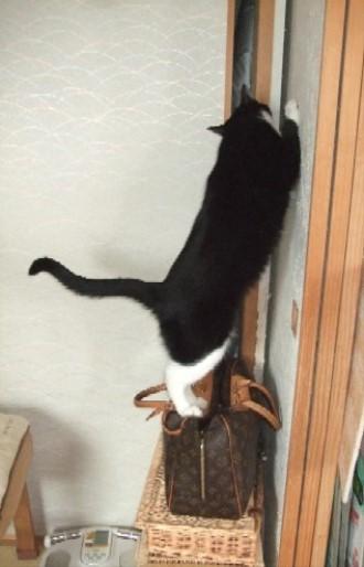 2008_0317猫写真0074